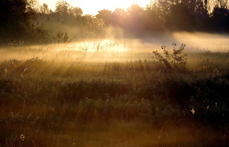 the-fog-2358045_960_720