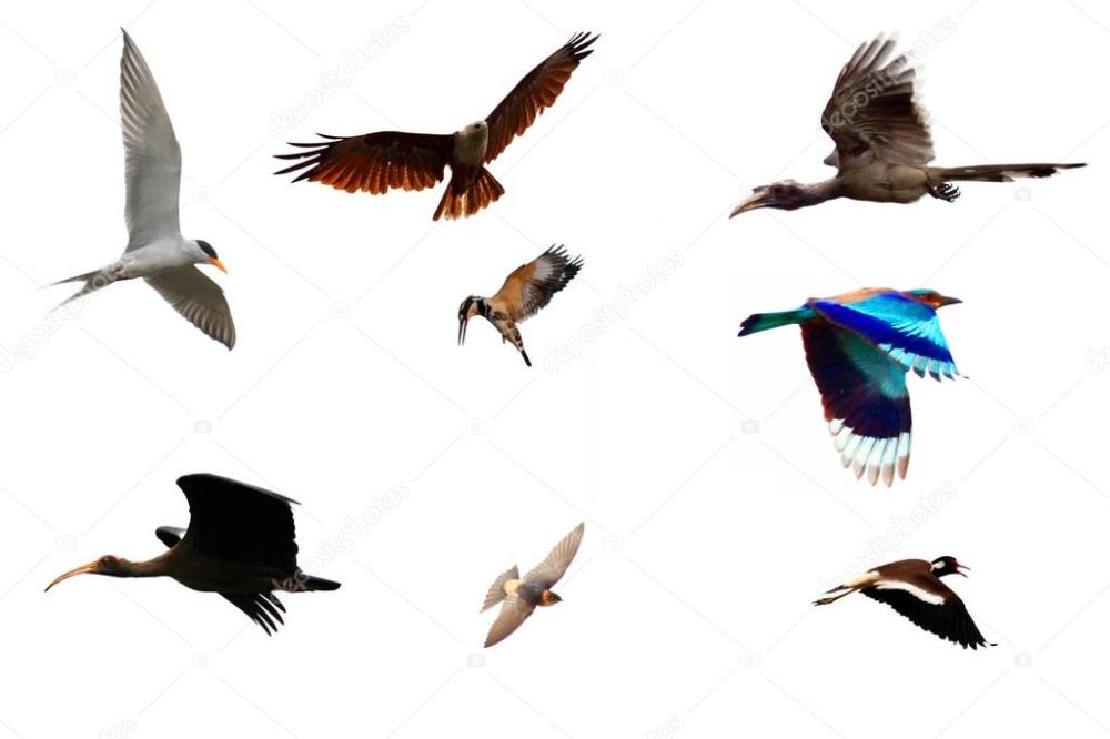 depositphotos_24804239-stock-photo-different-species-of-birds-flying.jpg