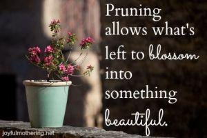 pruning 3