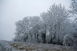 Frosty Trees am Birting